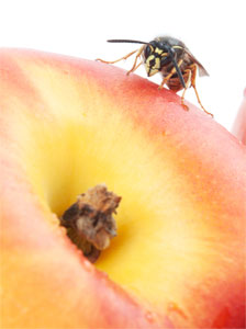 peach-with-bee